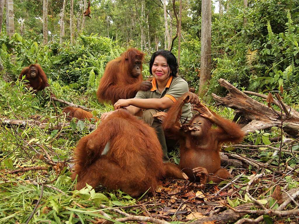 Save The Orangutan Our Work Rehabilitation